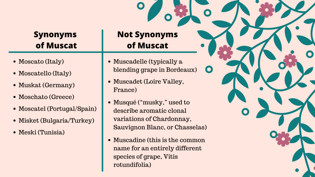 A table showing grape varieties synonymous and not synonymous with Muscat.